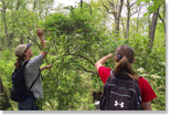 HMF students identify forest plants