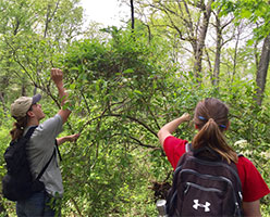 Students identify trees in the Hutcheson Memorial Forest