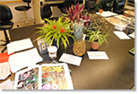 view of plants on a lab bench with learning materials, image courtesy of Susanne Ruemmele