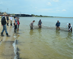 Parasite Ecology - Students use seine nets to collect aquatic invertebrates for IDing in Sandy Hook